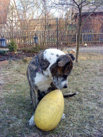 Hundeschule in Falkensee